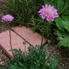 5ALA ・ 今朝の植物たち