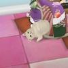 のび~る猫