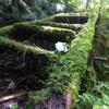 【自然】かまんどの滝