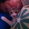 猫に個性(その甘え方の違いがまた可愛い)