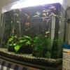 美しい熱帯魚水槽をご覧ください