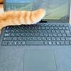 「テレワークの最大の課題は猫」というお話