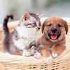 中国で猫を飼う。おすすめキャットフードは?