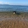 岡山出向 記録⑩ 〜海水浴・さよなら岡山〜