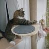 猫に必要な運動について