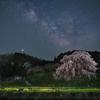 🌸奈良県の桜撮影🌸