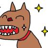 【シニア犬・老犬】【犬のおやつ】ヨーグルトを食べさせています