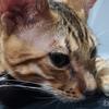 猫の去勢・避妊は飼い主の義務! メリット・デメリット 費用は? 性格が変わる? んなのどーでもいい。