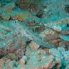 石切 スキューバダイビング ログ72