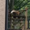 上野動物園12回目 国立科学博物館のコンパス