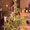 2020年は11月19日から販売開始。IKEA 本物のもみの木でクリスマスツリー。使用後は買い物クーポンと引き換え。