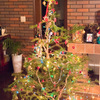 IKEA 本物のもみの木でクリスマスツリー。使用後は買い物クーポンと引き換え。2017年は11月30日から販売
