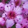 筑波山,今日の花とか
