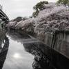 【200】文京区関口 桜流れる神田川