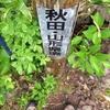 ◆'19/06/23  鳥海山・御浜まで②