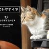 一人暮らしでも猫を飼いたい!ペットを飼いたい!を叶える家を作りたい!