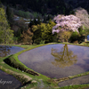 十日町で桜と棚田にチャレンジ
