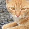 7月24日 埼玉県越谷市 の猫さま とその情景