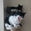 猫の飼い方♪室内での注意点や絶対NGな事は?