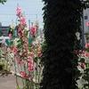 喫茶ミカドの近所/北海道札幌市