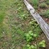 駆け込みの庭造り作業
