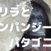 ゴリラとチンパンジーとパタゴニア