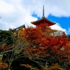 紅葉の京都「清水寺」から円山公園、知恩院を訪ねる