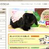 おしゃべりラビット クチコミ件数200件達成!!