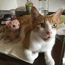 猫もたまたまガンプラ祭り