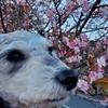 ❝鹿野山九十九谷展望台❞ 鴨川(君津)ドライブ⑤   愛犬とおでかけ-千葉県観光🎵 2021年2月11日