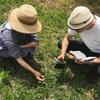 畑で野草勉強会。