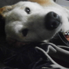 15年飼っていた犬が死んだ。