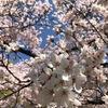 ルウさん、大阪を散歩する