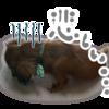 犬の多頭飼い暮らし日記:「香港で飼い犬がコロナに感染したというニュースを見て」