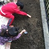 収穫が楽しみな、小さな家庭菜園