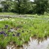 神代植物公園、水生植物園と植物多様性センターの花。