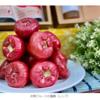 スイス国会議員、中国禁輸の台湾産レンブの輸入を計画 すばらしい 2021.9.24