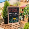 390円からはじめるお花のある暮らし ユニクロフラワー