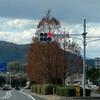 街路樹 メタセコイア