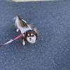 【犬】 ラムとアイラの日記 その1