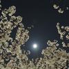 夜桜:近所で夜桜撮影練習するも…大失敗