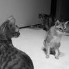 猫月さんは誕生日をどう過ごしたか? 猫4匹と過ごす孤独な1日