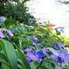 高幡不動尊の紫陽花祭りに行ってきました。その1~紫陽花まつり~
