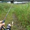 久しぶりにチヌ釣り♪