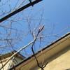 芽吹き始める 3月の庭