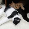 簡易猫用コタツの作り方