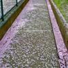 吉田秋生 著「桜の園」を大人になって読み返してみた感想