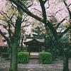547  雨と神社