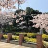横浜名所桜満開散歩の記・その3