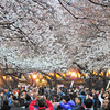 83倍ズームCOOLPIX P900で浅草・上野の桜を撮ってきた!